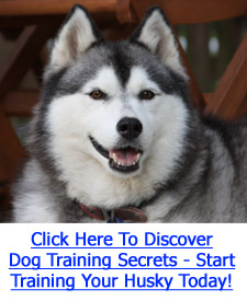 Husky Training Tips